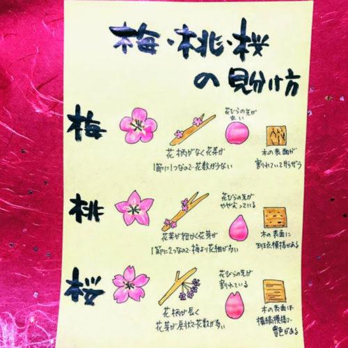 趣味 筆文字 魅楽流書家Candy キャンディ 作品 花の見分け方