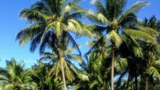 海も山も都会も田舎も全部あるオアフ島。ハワイ好きの僕がその魅力を熱く語る!