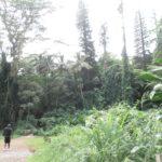 心身をリフレッシュ!ハワイ旅行ではマノアの滝への小冒険を楽しもう!