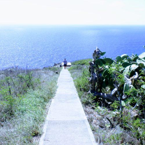 マカプウ 灯台 脇道 坂道